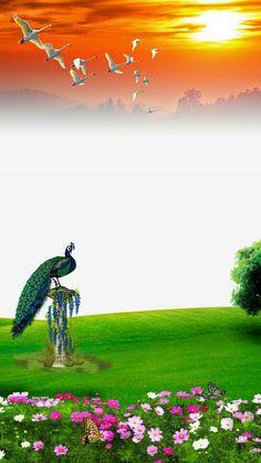 paisagem e ave maravilhosa Desktop Background Pictures, Blur Photo Background, Blue Background Images, Studio Background Images, Photo Backgrounds, Beautiful Photos Of Nature, Nature Pictures, Photography Studio Background, Jay Mataji