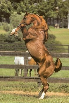 powerful horse