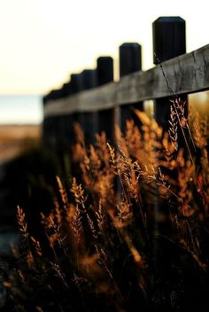 Close up of a fence with autumnal colours