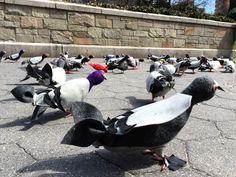 Felt pigeons! Made by Brooklyn artist Mother Pigeon.