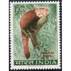 India, Wild Life, Himalayan Panda, 15 np, 1963 MLH