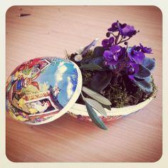 Easter Easter, Spring, Flowers, Design, Easter Activities, Royal Icing Flowers, Flower, Florals