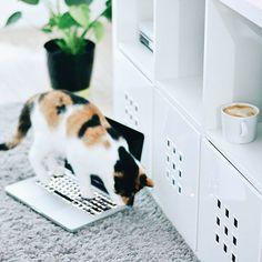 Halo halo! Jest tam ktoś? Muszę się poskarżyć. Na tego kota na zdjęciu, na te nieznośną trikolorkę, przez którą nie jestem dzisiaj w stanie zrobić najdrobniejszej rzeczy, bo jak małe dziecko pełza za mną na tych czterech białych łapkach i psoci. Gdy chciałam włożyć pranie do pralki, ta weszła do bębna i siedziała. A jak chciałam zrobić ciasteczka, by w domu pachniało już świętami (to przez @alee_bez) to weszła do lodówki. Jak chciałam przykryć sie kocem i przejrzeć zdjęcia, to usnęła na…