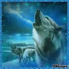 Bildergebnis für bilder wölfe kostenlos