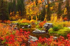 50 natural destinations which should always be fall - Wenatchee River (USA): A natural paradise full of life.