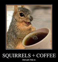 ¡Café para las ardillas!