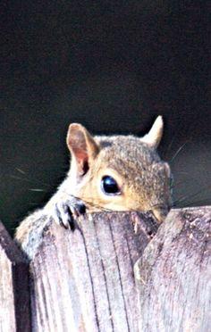 Secret Squirrel Files  (Feelin' Squirrely group board)