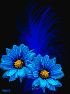 The Fatal Gift of Beauty Apple Wallpaper Iphone, Cute Wallpaper Backgrounds, Flower Backgrounds, Cute Wallpapers, Flowers Gif, Blue Flowers, Beautiful Gif, Beautiful Roses, Blue Flower Wallpaper