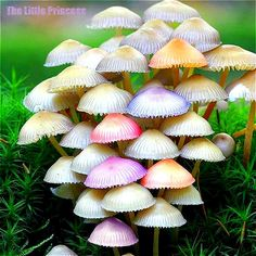 Image result for rare colorful mushrooms
