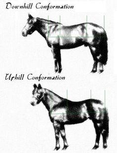 uphill downhill horse conformation topline
