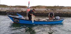 O Palhetas na Foz: Polícia Marítima capturou 4.500 Kg de berbigão que...