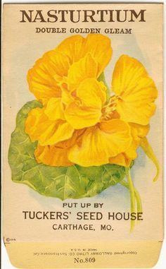 vintage seed packet - nasturtium