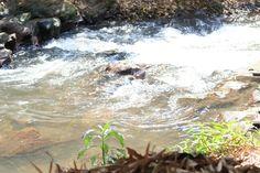 Riacho coqueiros