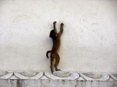 monkey at the bottom of the hill of the Swayambhunath Temple or Monkey Temple - Kathmandu, Nepal