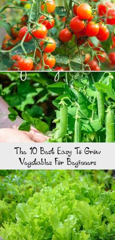 1040 Best Container Gardening Images In 2020 Container Gardening
