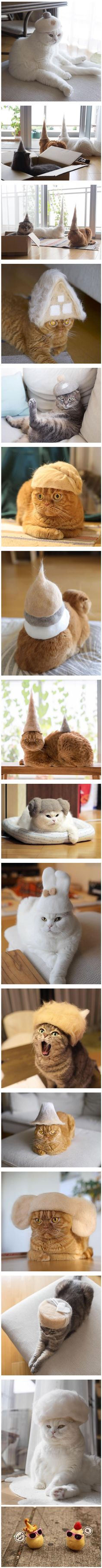 Photographer Makes Hats For His Cats Using Their Own Fluff - 9GAG and like OMG! get some yourself some pawtastic adorable cat apparel!