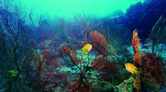 """J., 18 SEP 2014   DESCUBRIMIENTOS CIENTIFICOS → MONTE SUBMARINO - """"Descubren un nuevo monte submarino de 1.100 metros en el océano Pacífico"""" .. La elevación podría tener una antigüedad de unos cien millones de años"""