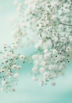 Springtime bokeh