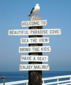 Paradise Cove Road, Malibu wedding location here!
