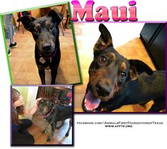 Maui    Animals First Foundation of Texas Irving,75039  469-371-6419