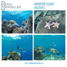 #diving #Manta #beach #snorkeling #fishing #picnic #mathiveri #Island #ttot #budgettravel #Maldives #people #nature
