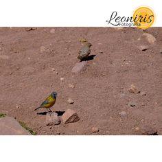 https://flic.kr/p/wWmCFv | Dos pájaros, Mendoza, Argentina
