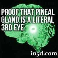 Is it possible that you literally have a third eye that connects you to spiritual dimensions? Very few people realize that the pineal gland is, in fact, a literal eye.