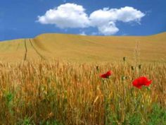 This is scene from Vojvodina, Serbia. Serbian, Vineyard, Wordpress, Scene, Album, Mountains, World, Places, Travel