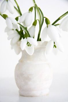 Such pretty little flowers called Snowdrops and they bloom in early spring. Little Flowers, My Flower, White Flowers, Beautiful Flowers, Birth Flower, Beautiful Beautiful, Deco Floral, White Gardens, Spring Flowers