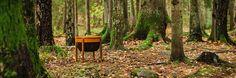 Norwegian Design in the Woods!