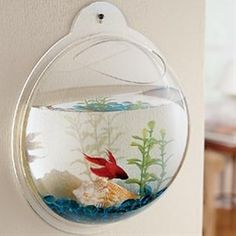Fish bowls that hang on walls? - Click image to find more design Pinterest pins