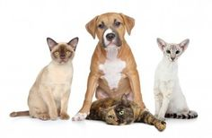 Remember Pets during Poison Prevention Week - learn how to poison proof your house!