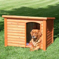 Cauti Cusca Caine - Aici gasesti totul despre cotet caine... Wood Dog House, Animal House, Outdoor Furniture, Outdoor Decor, Outdoor Storage, Shed, Outdoor Structures, Pets, York