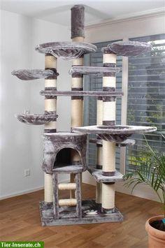 ... , robuste Katzenbäume für grosse und schwere (Rasse-) Katzen