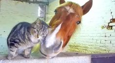 Country Music Lyrics - Quotes - Songs Animals - This Purr-fect Friendship Is Too Cute For Words - Youtube Music Videos http://countryrebel.com/blogs/videos/63948547-this-purr-fect-friendship-is-too-cute-for-words