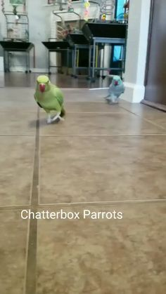 We're back! ❤❤If you love then save on your board. Funny Birds, Cute Birds, Pretty Birds, Beautiful Birds, Animals Beautiful, Cute Animal Videos, Funny Animal Pictures, Cute Little Animals, Cute Funny Animals