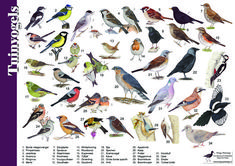 Herkenningskaart / zoekkaart Tuinvogels