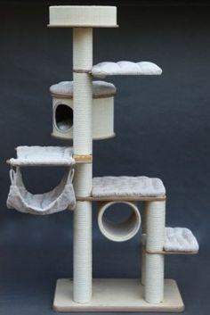 Britská kočka - RENDY CAT, CZ - chovatelská stanice
