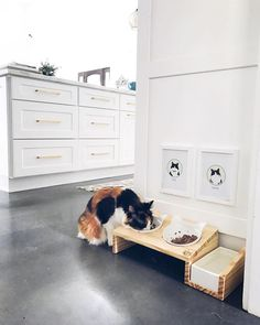 Modern pet products that will look good in any home. Check out ViviPet's elevated feeders for cats at www.vivipet.com Tap the link Now -  Luxury Cat Gear - Treat Yourself and Your CAT!  Stand Out in a Crowded World!