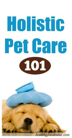 Natural remedies for pets: Did you know that you can treat the most common diseases of our furry friends with herbal and homeopathic remedies? Let's find out, then, how can we help them in a natural way. The ability to help the body heal itself naturally is not the sole prerogative of mankind, even our... | healthybuzzer.c