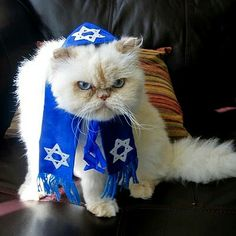 """Yiddish Grumpy Katool says - """"MAY YOU BE TURNED INTO A BLINTZ AND BE SNATCHED BY A CAT!"""""""