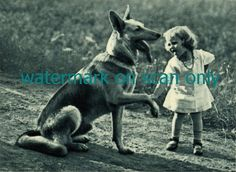 Vintage Blue Tint Photo~German Shepherd Dog Dogs~Cute Girl~ NEW Lge Note Cards