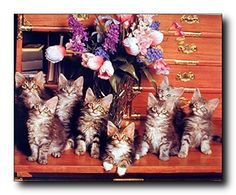 Transform your living space from ordinary to extraordinary with this Cute cat animal art print poster. This poster captures the image of cute Kittens Cats sitting on desk looking very adorable that is sure to make affectionate environment in any home decor and grab lot of attention. This poster will be a perfect gift for your kid's which will surely add fun element into your kid's bedroom. It would also make a perfect gift for cat lovers. It goes with any décor style and ensures durable…