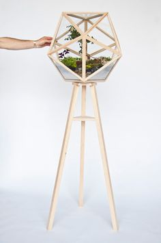 Terra  For the someone who has everything, this geometric terrarium was a limited edition piece. Framed in Hard Maple, the glass icosahedron spins on a tripod base allowing the viewer to experience the inner plantings from 360 degrees.    Fort Standard
