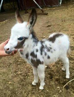 Animals 🙈 - Animals, animals wild, animals funny, animals cutest, animals and pets Baby Donkey, Cute Donkey, Mini Donkey, Donkey Funny, Baby Cows, Baby Horses, Cute Creatures, Beautiful Creatures, Animals Beautiful