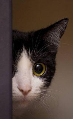 Always Love a Peek-a-Boo Cat! – 16th June 2013