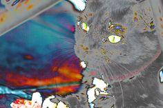 Gordita's acid trip