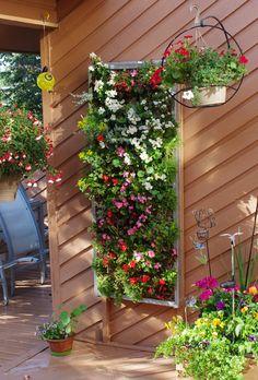 latest pic July 2014 Living Walls, Small Gardens, Garden Ideas, Backyard, Outdoor Structures, Plants, Backyards, Verandas, Environment