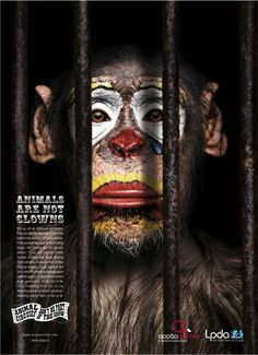 This ad shows that animal circuses are among many things that are considered animal cruelty. It encourages people not to attend these shows because it encourages the showrunners to continue having them  and abusing animals as a result.