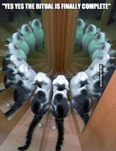 """""""Yes yes the ritual is finally complete"""" #catoftheday"""